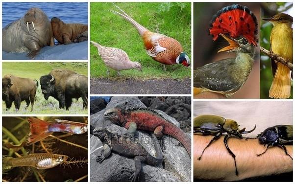 Sexual dimorphism in mammals