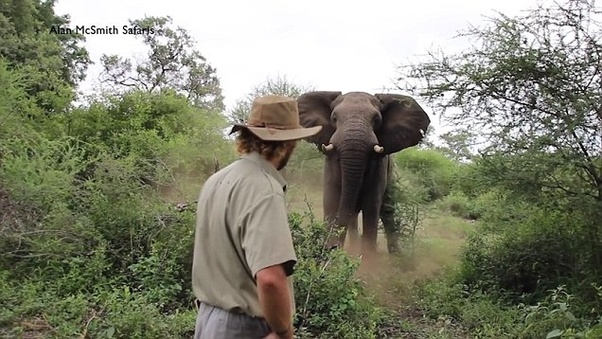 How would you defend yourself from an elephant? - Quora