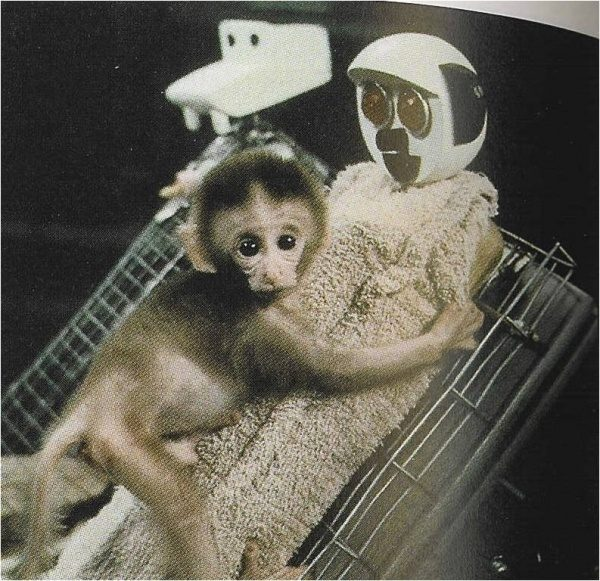harry harlow monkey experiment Psychological experiments harry harlow's famous maternal deprivation experiments on rhesus monkeys in these inherently cruel experiments, young monkeys.