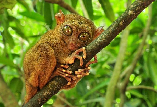 Weird Animals With Big Eyes 6