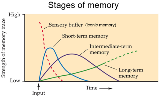 Why do I feel I forget everything I learn? - Quora