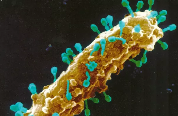 Surprisingly CRISPR Cas9 Technology Has Been Invented Based On The Bacterial Innate Immune Response To Viral Nucleic Acids Attack