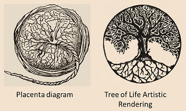 What Does The Tree Of Life Symbolize Quora