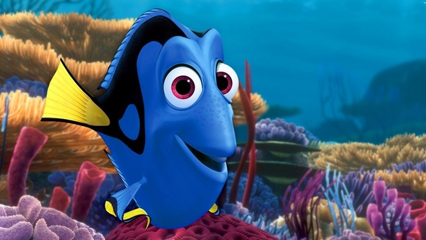 In Finding Nemo What Kind Of Fish Is Dory Quora