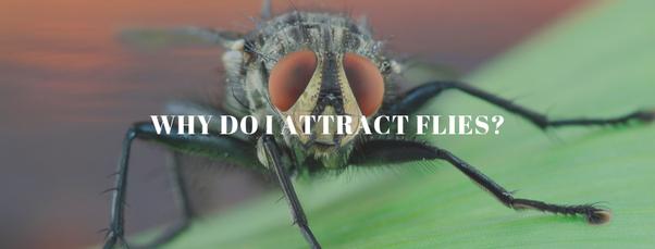 5bddebf0552 Why do I attract flies? - Quora