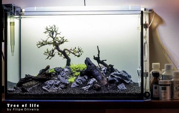 Closest Aquarium | Have Experiments Been Done Combining Bonsai Trees And Freshwater