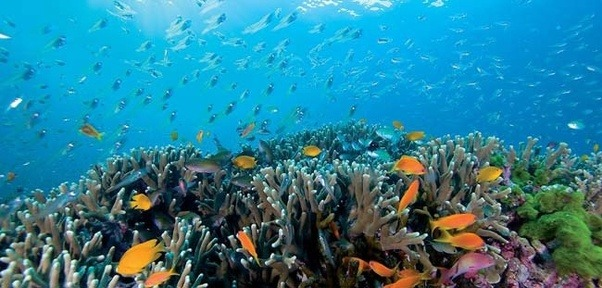 Another Great Spot To Scuba Dive Is Similan Islands
