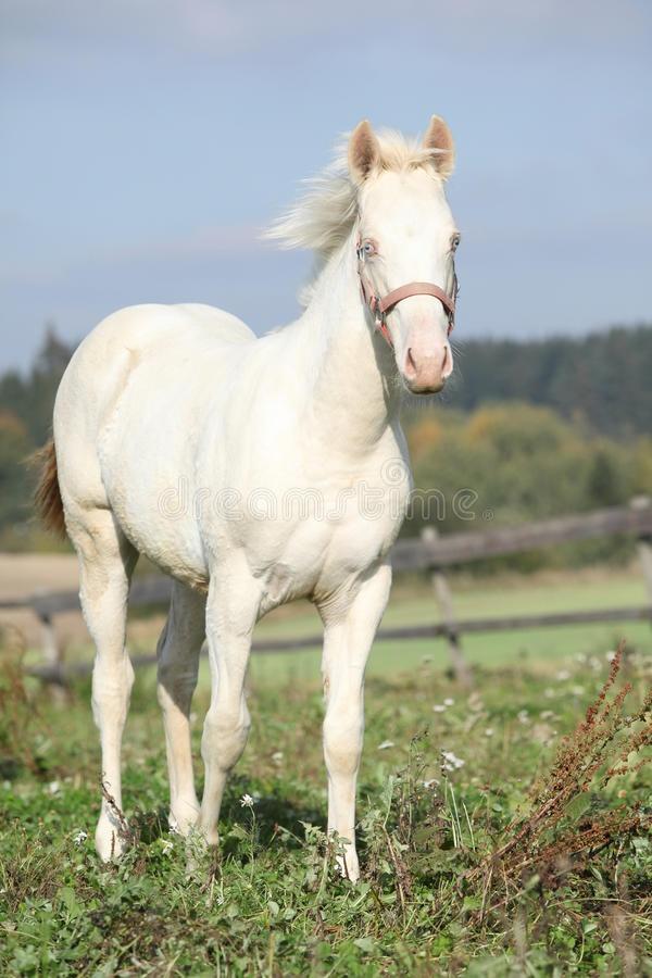 I heard somewhere that albino horses do not exist. Is this true or false? - Quora - photo#20