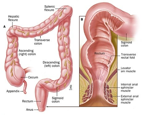 During a colonoscopy, how do they get the scope to bend around the ...