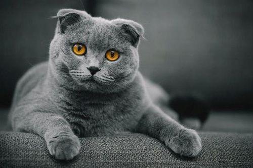 Apa Jenis Kucing Berwarna Abu Abu Yang Sering Sekali Diposting Di Akun Instagram Kucing Quora