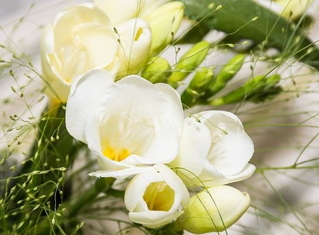 What are freesia flowers quora whole blossoms is the perfect online florist website so you can get fresh freesia flowers with a quick delivery service and at very effective prices mightylinksfo