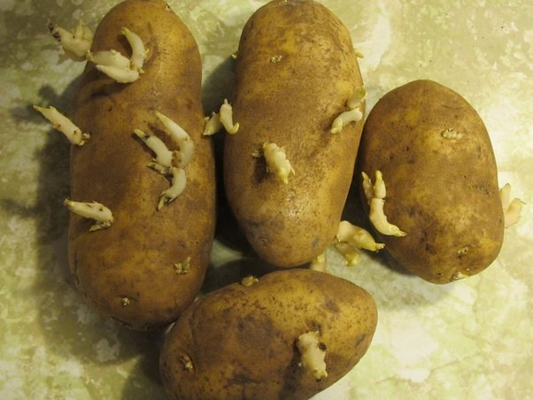 Image result for potatoes with eyes
