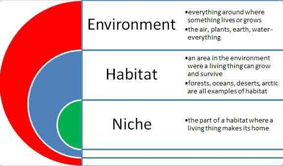 what are habitats and niches