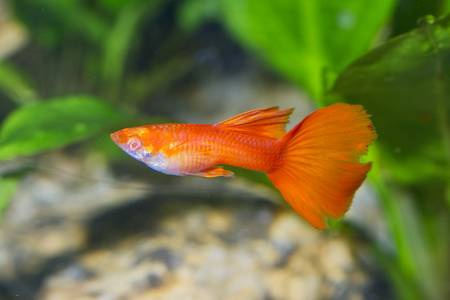 What is the smallest tropical fish? - Quora