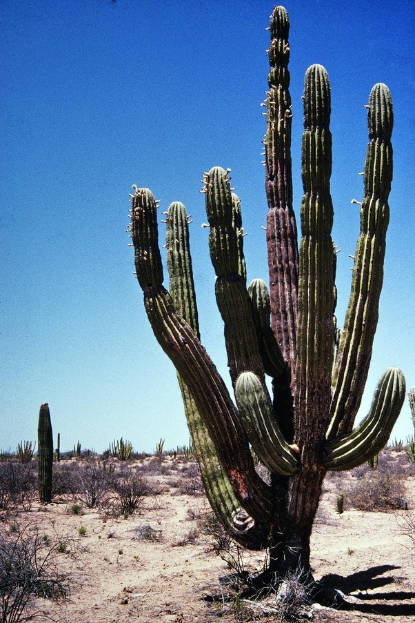 what do the different types of cactus look like quora