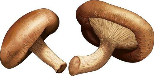how to grow mushrooms quora