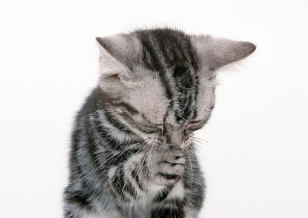 Can Cats Get Colds From Humans