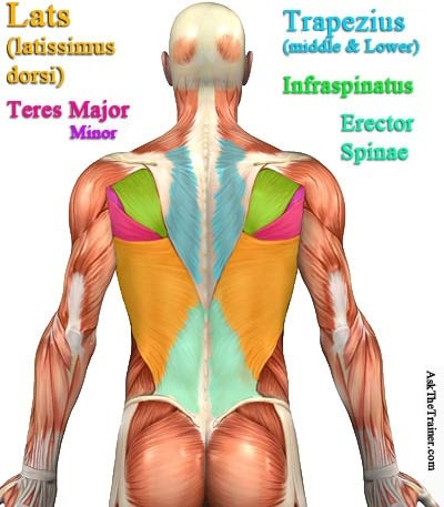 By Upper Lats Do You May Mean Terrs Major The Following Chart Help Pinpoint Muscle Are Looking To Work Out