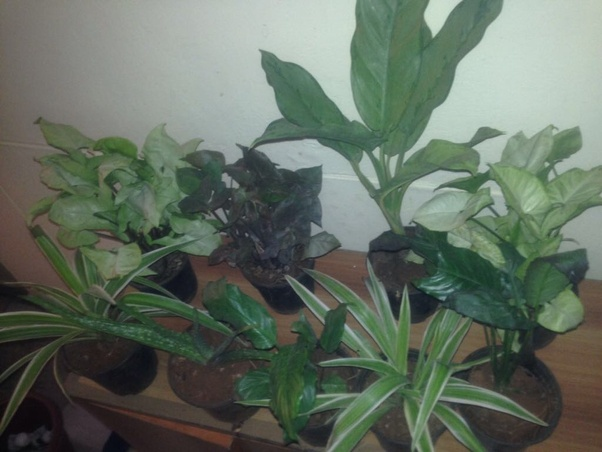 Where do I get indoor plants in Hyderabad? - Quora
