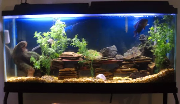 what should i do with a 60 gallon fish tank quora