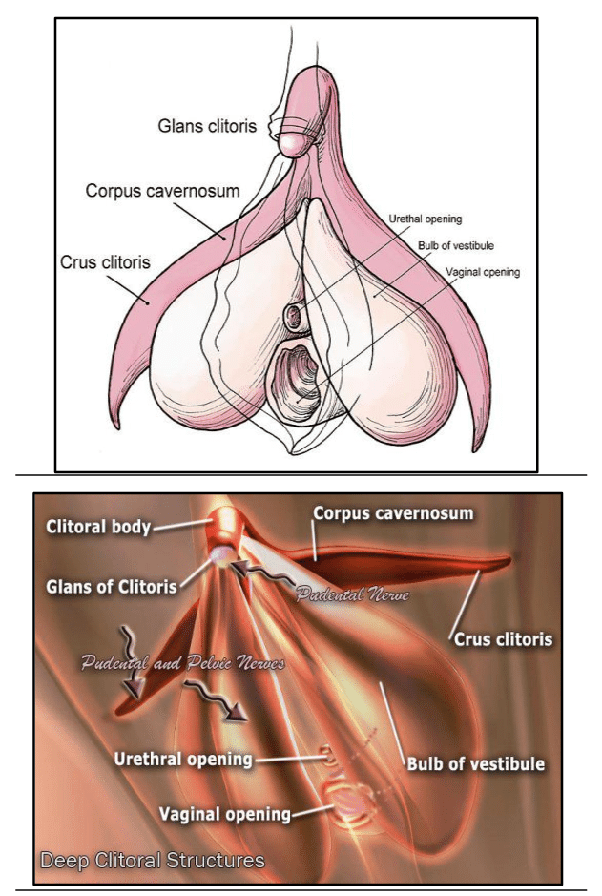 How to have a vaginal orgasm
