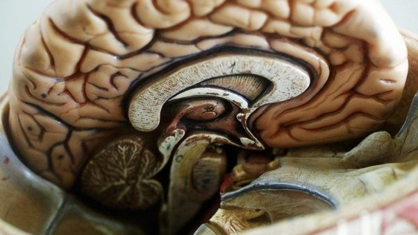 What is the biggest part of the human brain? What is its ...
