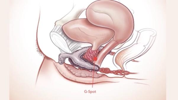 urge urinate clitoris to causing Irritated