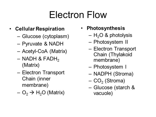 what is the similarities between an electron transport