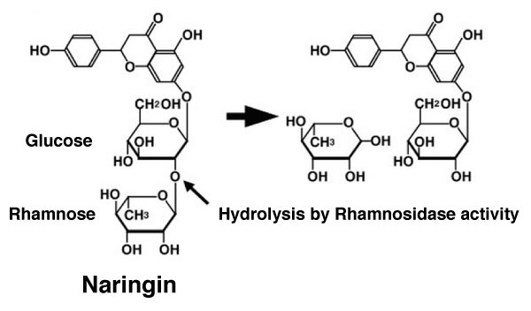 What Is The Product Of Hydrolysis Of Rhamnose Quora
