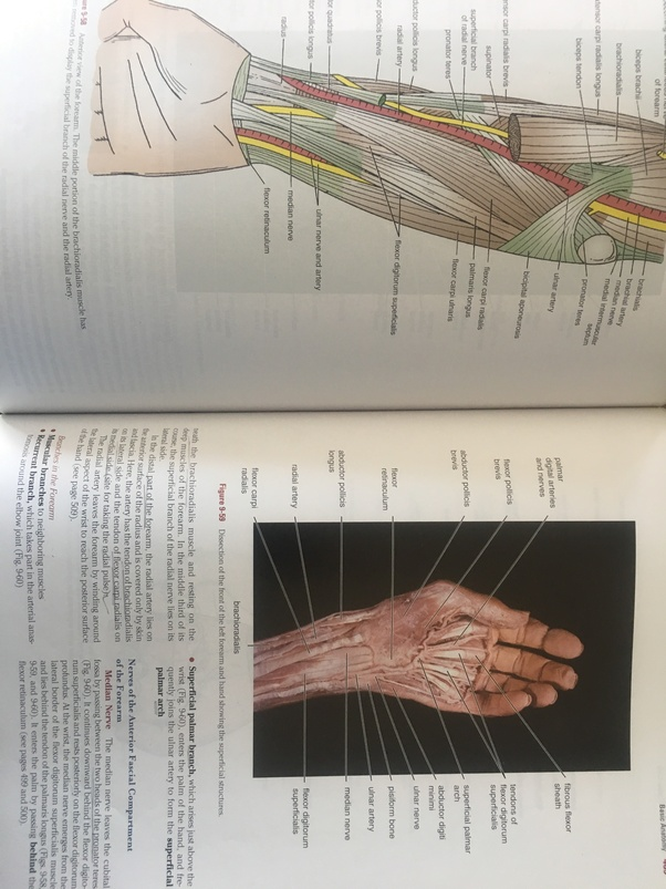 What Is The Best Clinical Anatomy Book For A 1st Year Mbbs Student