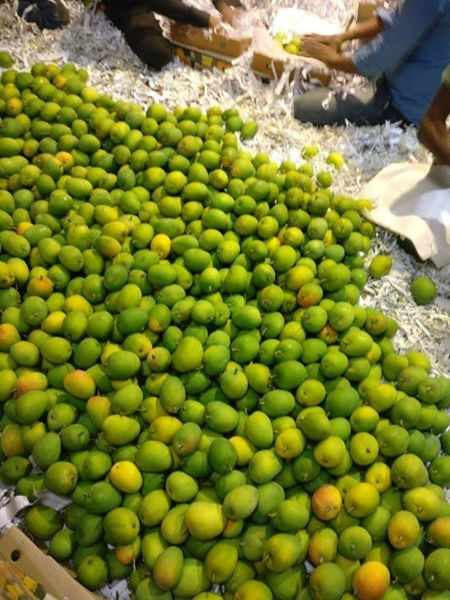 I want to import mangoes from India in UK for sale  How do I get