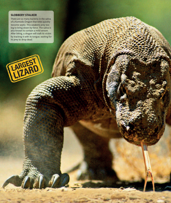 Animal photographs: the most amazing ones? - Quora