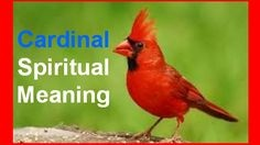 What is the biblical or spiritual meaning of two doves and a