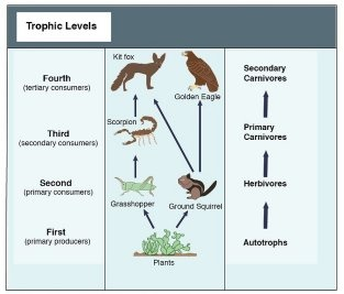 What is the food chain? - Quora
