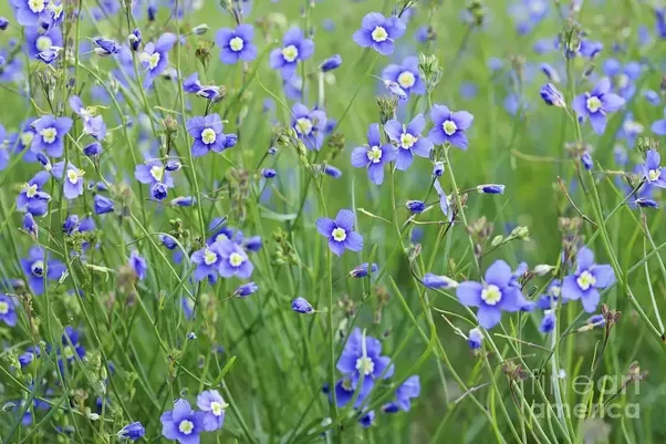 Health benefits of Flax Seeds in hindi/urdu/alsi seeds ...  |Flax Seed In Hindi