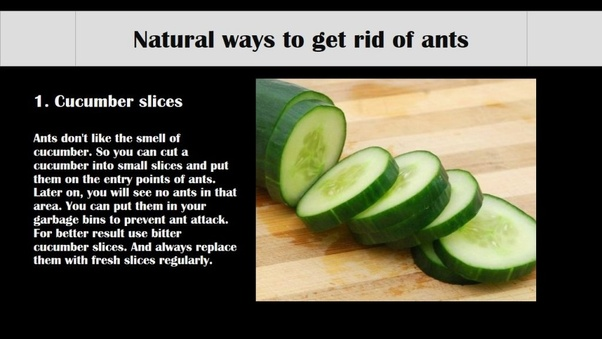 how to get rid of small ants