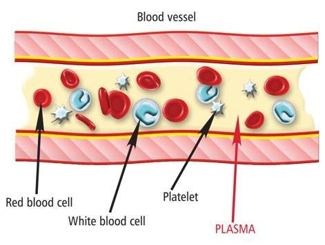 relationship between blood and plasma donation