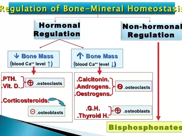 17++ How does estrogen deficiency cause osteoporosis viral