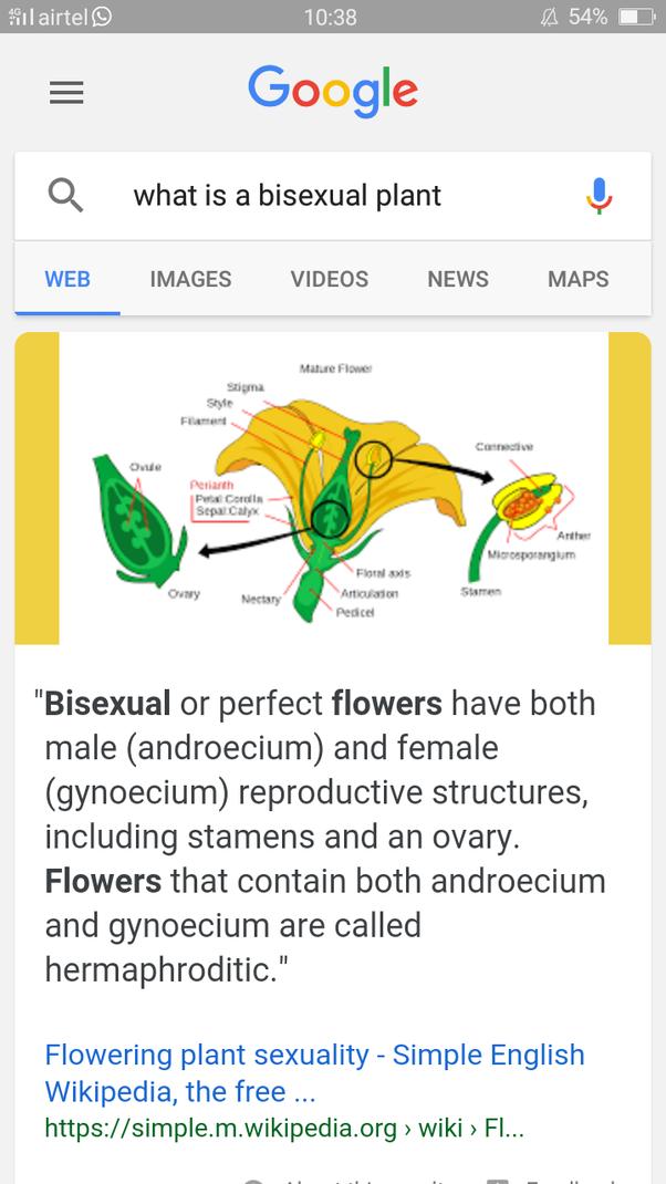 Biosexual private parts