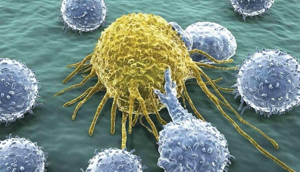 Image result for T cells