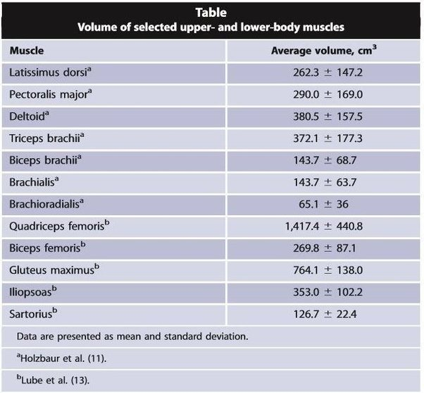 What Is The Largest Muscle In The Human Body Quora