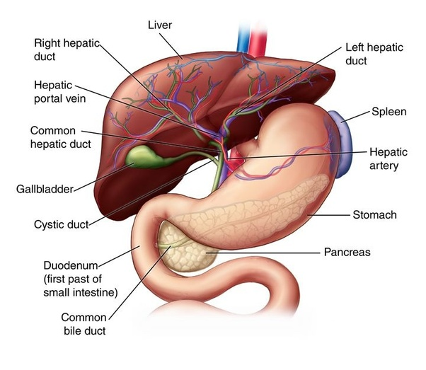 Which Is The Best Liver Transplant Hospital In India Quora