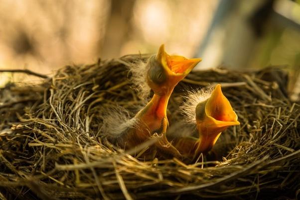 Where do the birds go to die? - Quora