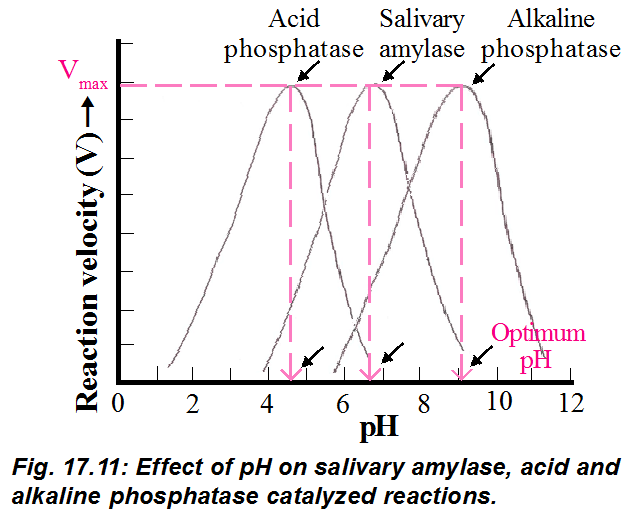 effect of ph on invertase activity