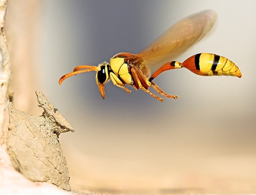 Do Wasps That Were In The Hunger Games 2012 Exist In Real Life