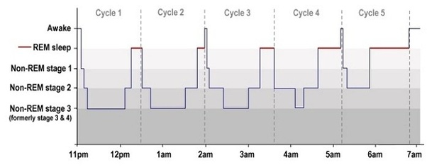 the graph above shows the average sleep architecture of humans  of course  there are individual differences, but in general we more or less see these  kind of