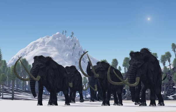 ¿Cómo se extinguieron los mamuts lanudos?