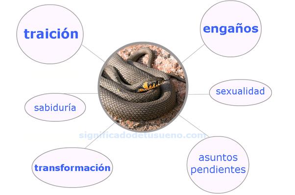 Qué Significa Soñar Con Una Serpiente Quora
