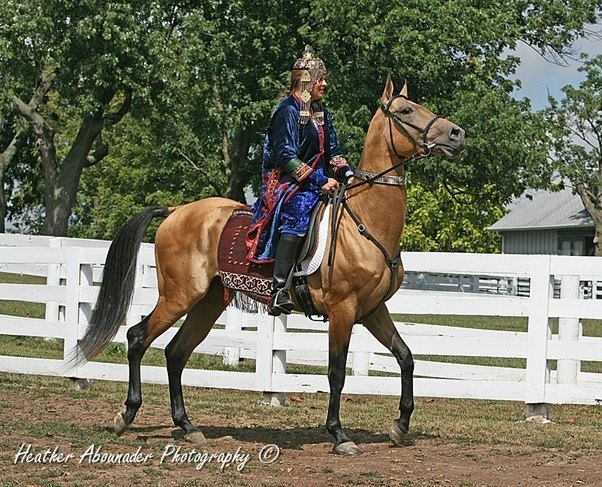 What Are The Top Ten Fastest Horse Breeds Quora