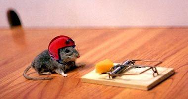 Attraper Les Souris quels sont les meilleurs moyens d'attraper une souris qui s'est